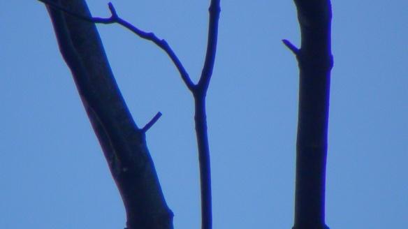 blue branches f4mmedia
