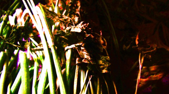 dramatic leaves1