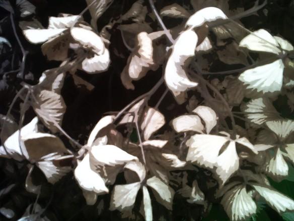 foliage 4