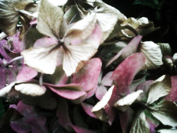 foliage2