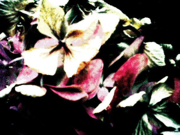 foliage2a
