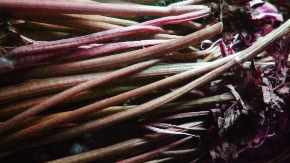 stalks 1